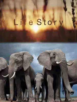 داستان زندگی