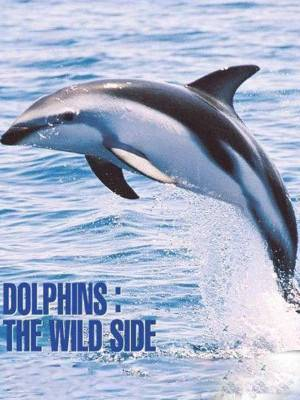 دلفین های وحشی