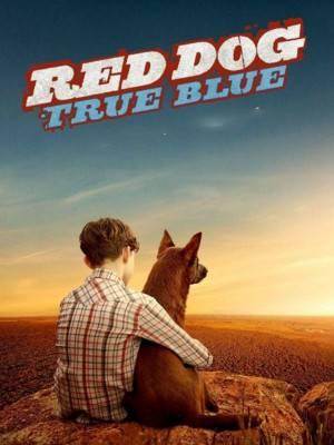 سگ قرمز : آبی واقعی