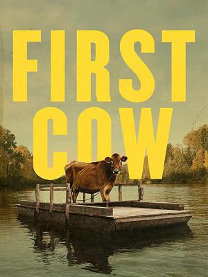 اولین گاو