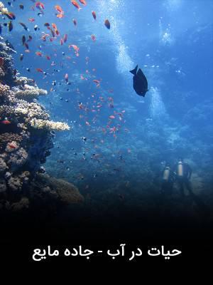 حیات در آب - جاده مایع