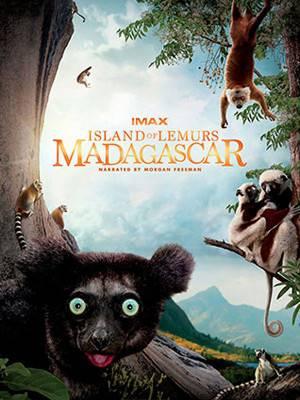 جزیره لمورهای ماداگاسکار