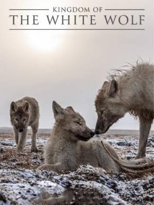 پادشاهی گرگ سفید